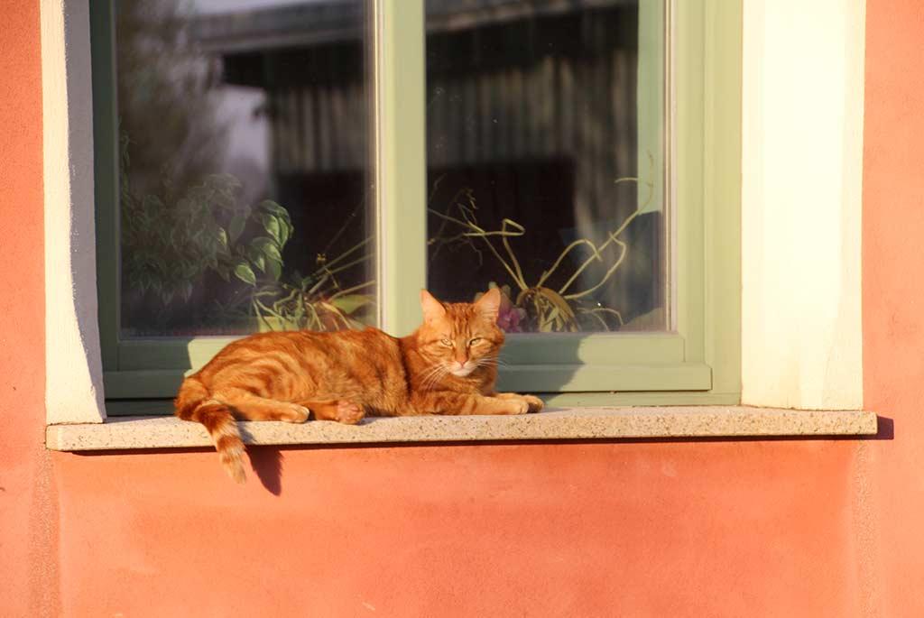 Katze liegt auf Fensterbank, grüne Holzfensterrahmen und weiße Umrandung, Fassadenfarbe rot